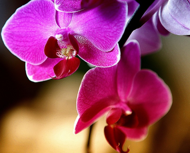 orchid-629961_1280
